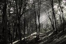 Lesní záře pod Helfštýnem