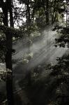 Porubský les